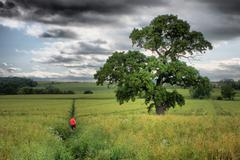 Large tree in field under cloudy sky Stock Photos