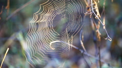Web spider at wind Stock Footage