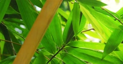 Green bamboo leaves in  tropical forest lush. Close up 4K video Stock Footage