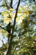 Tree branches, full frame Stock Photos