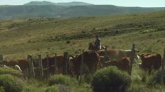 RA Gauchos 08b Stock Footage