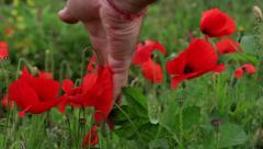 Hand brushing through poppy field slow motion Stock Footage