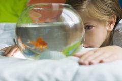 Child watching goldfish swim in fishbowl - stock photo
