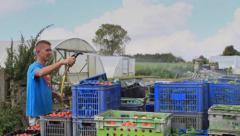 A man washes down boxes of organic vegetables in a British farm Stock Footage