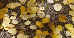 Golden Yellow Fall Autumn Leaves on Ground in Mountains 4K 4096x2160 Stock Footage