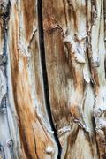 Aspen wood grain Stock Photos