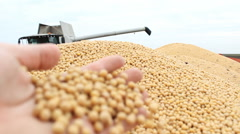 Soybean combine after harvest loading in the tractor soya - stock footage