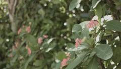 Tropical Flowers in Botanical Garden with thick foliage in background Stock Footage