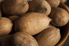 raw organic whole pecans - stock photo