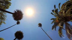 Clean Unpolluted Evergreen Palm Tree Tropical Tourism POV Driving Beverly Hills - stock footage
