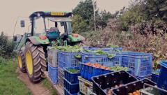 Tractor with organic produce Stock Footage
