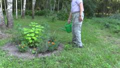 Gardener man with watering can water tagetes flowers Stock Footage