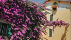 Bougainvillea Flowers Sirmione - 29,97FPS NTSC Stock Footage