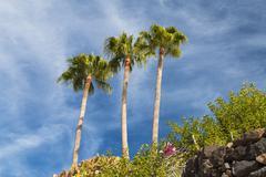 Palm trees at jandia beach in fuerteventura, spain Stock Photos