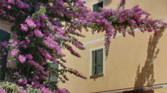 Green Shutters Yellow Wall Purple Flowers - 29,97FPS NTSC Stock Footage