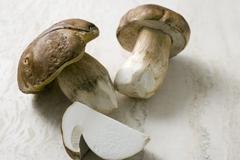 Stock Photo of Cep or Porcini mushrooms (Boletus edulis)