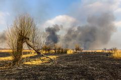 Wildfire in the field with burned dry grass and burned tree on a foreground Stock Photos