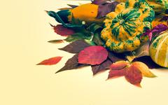 autumn leaves of wild grapes pumpkins, foliage. - stock photo