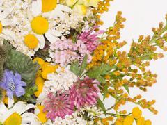 Clover, chamomile, yarrow Stock Photos