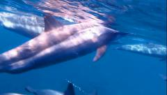 Dolphins very close. Stock Footage