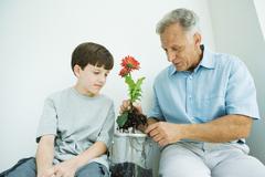 Mature man sitting with grandson, potting gerbera daisies Stock Photos
