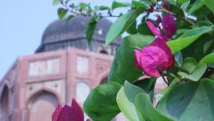 The flower on the background of the Indian castle Stock Footage