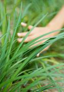Woman's hand touching long grass Stock Photos