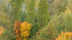 Colorful autumn forest swaying in the wind Stock Footage