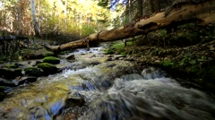 Small Creek with Log Stock Footage