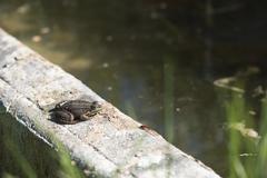 Frog and firebug Stock Photos