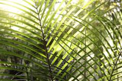Lush foliage in rain forest Stock Photos