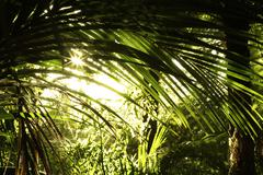 Stock Photo of new zealand tropical jungle forest