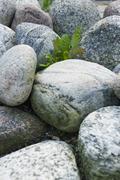 Solitary plant growing amongst rocks Stock Photos