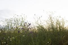 Wildflowers against pale sky - stock photo