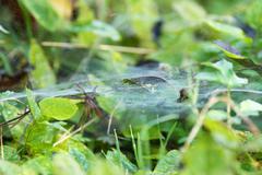 Stock Photo of Spiderweb on vegetation, close-up