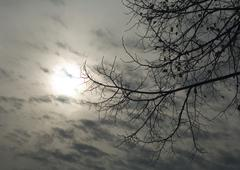 Cloudy sky and bare branches - stock photo