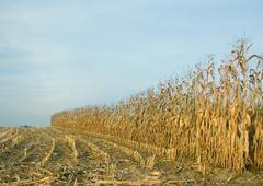 Partially harvested field Stock Photos