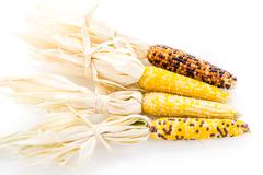flint corn - stock photo