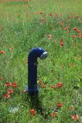Water spigot in field of poppies Stock Photos