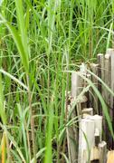 Long grass and wooden fence - stock photo