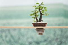 Potted plant set on wood railing with small stones stacked inversely from - stock photo