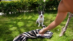 Cute Dog and Man Are Playing in Park. Stock Footage