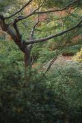 Tree and undergrowth Stock Photos