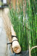 Rushes and dried twigs, close-up - stock photo