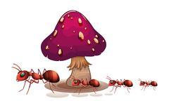 A colony of ants near the mushroom - stock illustration