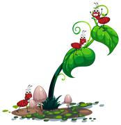 A green plant with ants Stock Illustration
