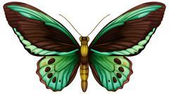 Common green birdwing Stock Illustration