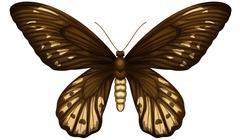 Queen Alexandra's birdwing Stock Illustration
