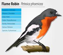 Flame robin - stock illustration