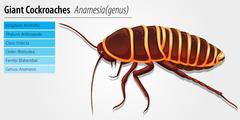Stock Illustration of Giant cockroach - Anamesia